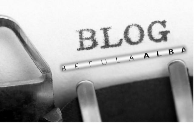 logo blog betula